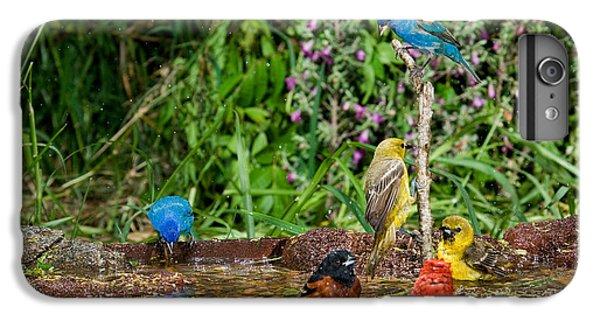 Birds Bathing IPhone 6s Plus Case by Anthony Mercieca