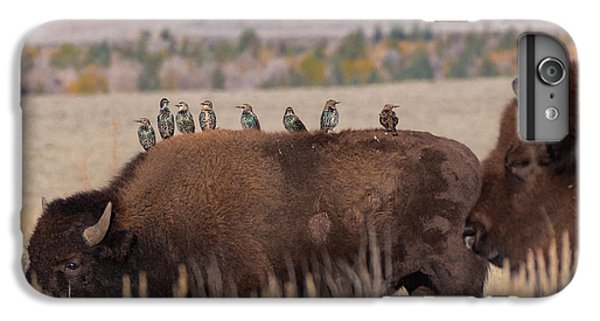 Bison And Buddies IPhone 6s Plus Case