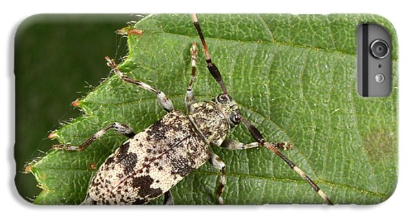 Black-clouded Longhorn Beetle IPhone 6s Plus Case
