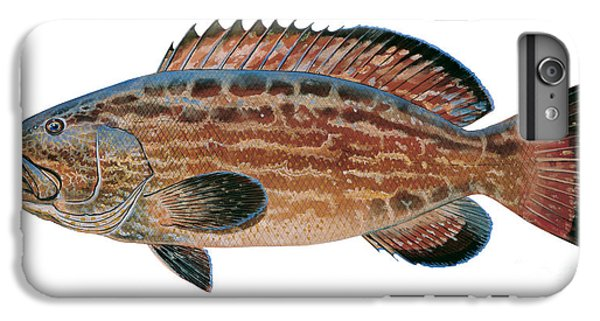 Black Grouper IPhone 6s Plus Case by Carey Chen
