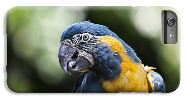 Blue And Gold Macaw V5 IPhone 6s Plus Case by Douglas Barnard