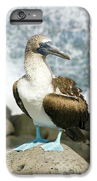 Boobies iPhone 6s Plus Case - Blue-footed Booby by Daniel Sambraus