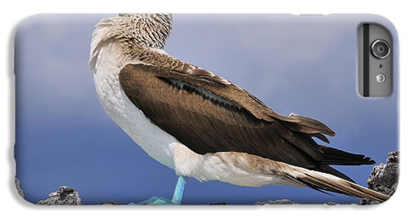 Boobies iPhone 6s Plus Case - Blue-footed Booby by Tony Beck