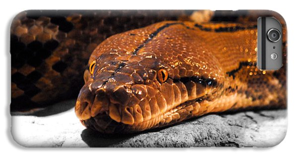 Boa Constrictor IPhone 6s Plus Case by Jai Johnson