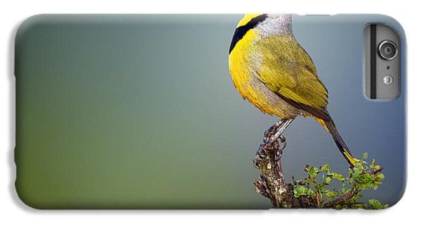 Birds iPhone 6s Plus Case - Bokmakierie Bird - Telophorus Zeylonus by Johan Swanepoel