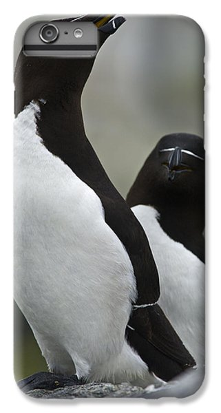Bonded For Life... IPhone 6s Plus Case by Nina Stavlund