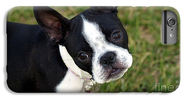 Boston Terrier Puppy IPhone 6s Plus Case by Marvin Blaine