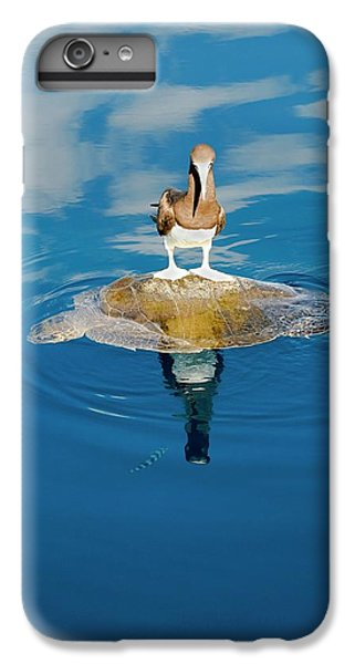 Boobies iPhone 6s Plus Case - Brown Booby And Marine Turtle by Christopher Swann