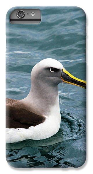 Buller's Albatross (thalassarche Bulleri IPhone 6s Plus Case