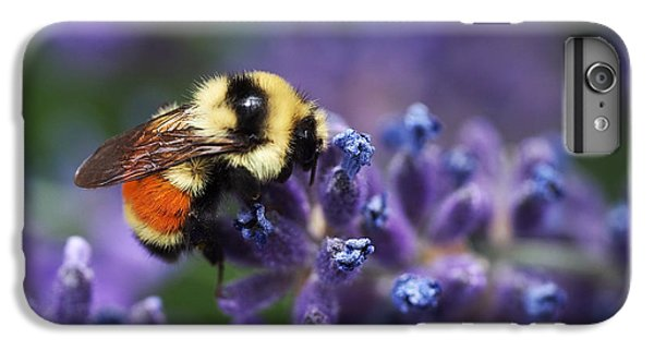 Bumblebee On Lavender IPhone 6s Plus Case by Rona Black