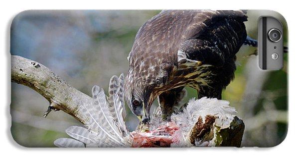 Buzzard iPhone 6s Plus Case - Buzzard Preying On A Bird Carcass by Dr P. Marazzi