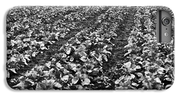 IPhone 6s Plus Case featuring the photograph Cabbage Farming by Ricky L Jones