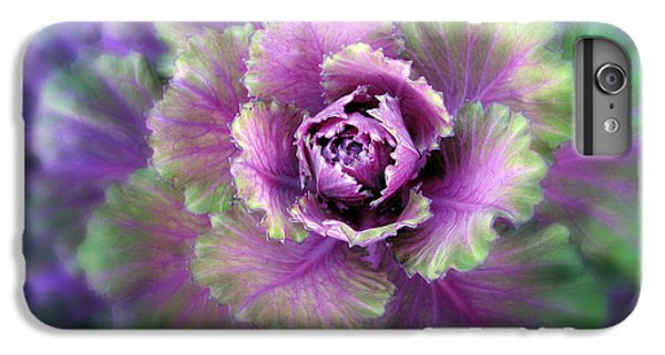 Cabbage iPhone 6s Plus Case - Cabbage Flower by Jessica Jenney