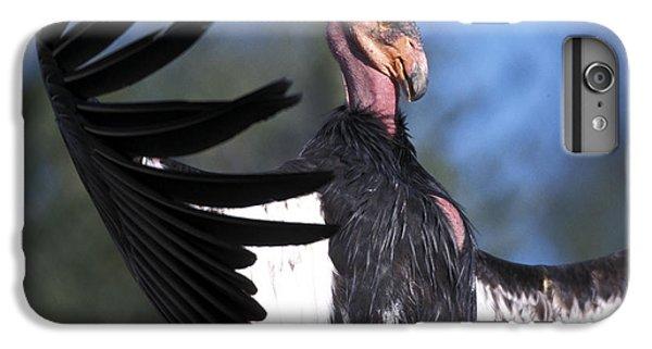 California Condor IPhone 6s Plus Case by Mark Newman