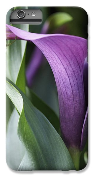 Lily iPhone 6s Plus Case - Calla Lily In Purple Ombre by Rona Black