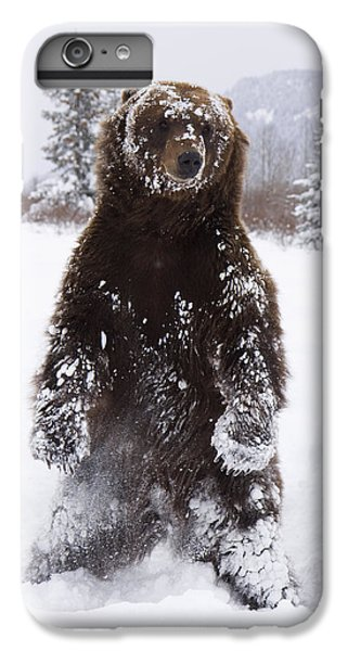 Captive Grizzly Stands On Hind Feet IPhone 6s Plus Case by Doug Lindstrand