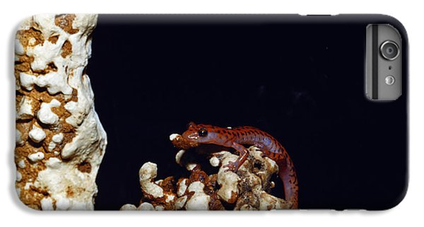 Cave Salamander IPhone 6s Plus Case by Charles E. Mohr