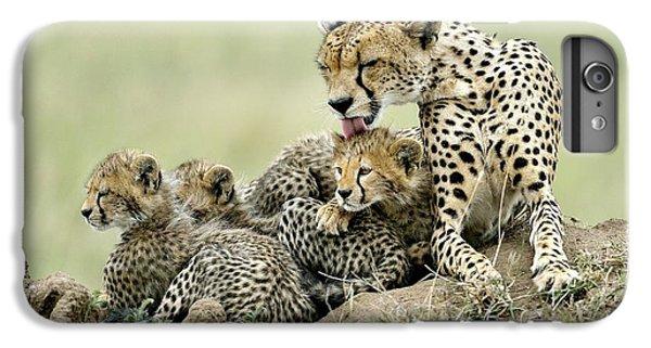 Cheetahs IPhone 6s Plus Case