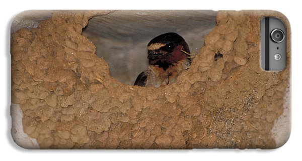 Cliff Swallows IPhone 6s Plus Case by Paul J. Fusco