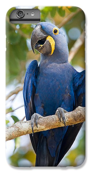 Macaw iPhone 6s Plus Case - Close-up Of A Hyacinth Macaw by Panoramic Images