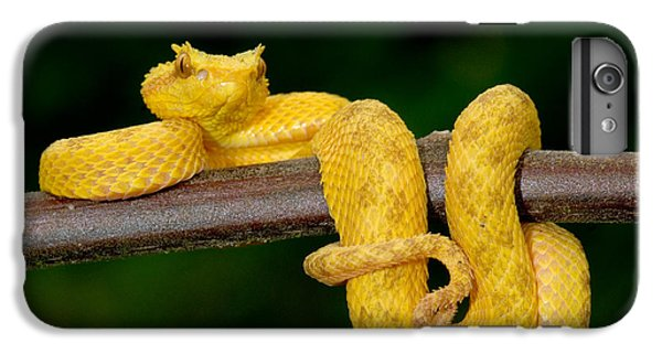 Close-up Of An Eyelash Viper IPhone 6s Plus Case