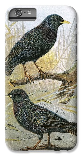 Starlings iPhone 6s Plus Case - Common Starling Top And Intermediate Starling Bottom by English School