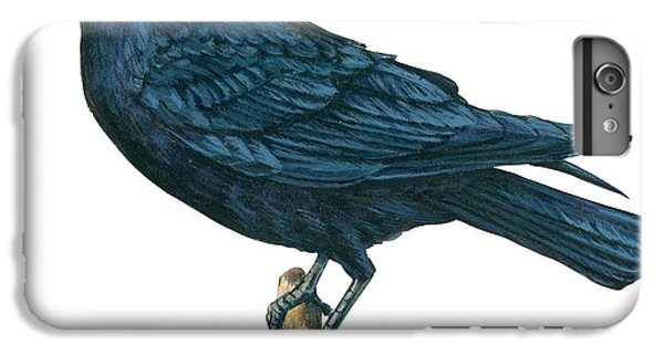 Crow IPhone 6s Plus Case by Anonymous