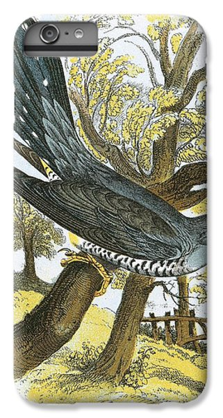 Cuckoo iPhone 6s Plus Case - Cuckoo by English School