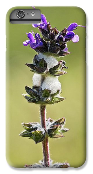 Cuckoo iPhone 6s Plus Case - Cuckoo-spit On Clary (salvia Verbenaca) by Bob Gibbons