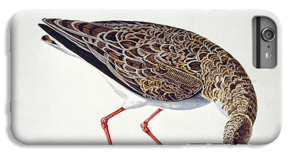 Sandpiper iPhone 6s Plus Case - Curlew Sandpiper by Charles Collins