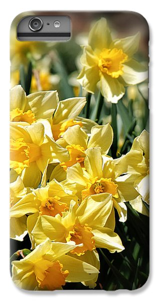 Daffodil IPhone 6s Plus Case by Bill Wakeley