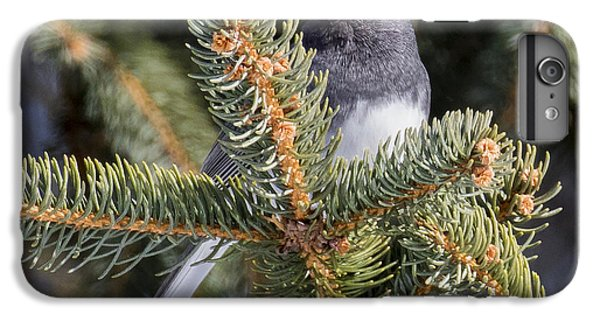 Dark-eyed Junco  IPhone 6s Plus Case by Ricky L Jones