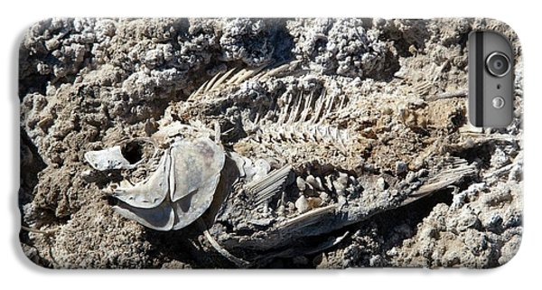 Dead Fish On Salt Flat IPhone 6s Plus Case by Jim West