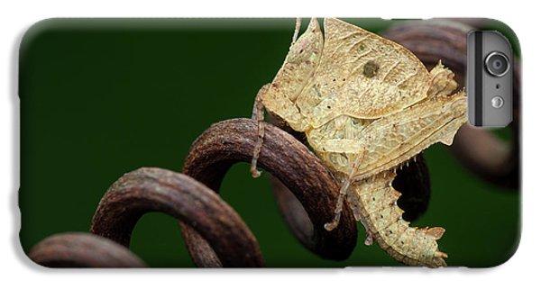 Grasshopper iPhone 6s Plus Case - Dead Leaf Grasshopper Nymph by Melvyn Yeo