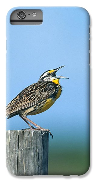 Eastern Meadowlark IPhone 6s Plus Case by Paul J. Fusco