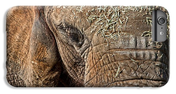 Elephant Never Forgets IPhone 6s Plus Case by Miroslava Jurcik