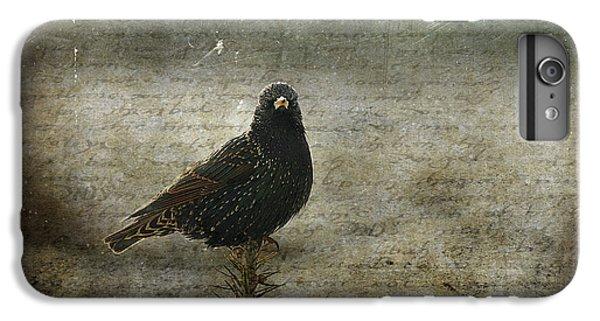 Starlings iPhone 6s Plus Case - European Starling by Cindi Ressler