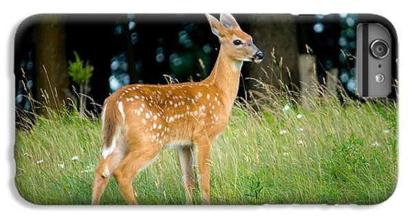 Deer iPhone 6s Plus Case - Fawn by Shane Holsclaw