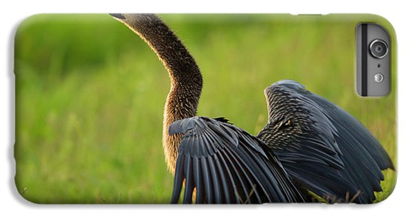 Anhinga iPhone 6s Plus Case - Female Anhinga Drying Out Wings by Maresa Pryor