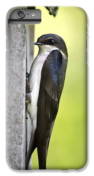 Tree Swallow On Nestbox IPhone 6s Plus Case by Christina Rollo