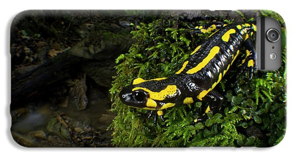 Salamanders iPhone 6s Plus Case - Fire Salamander (salamandra Salamandra by Andres Morya Hinojosa