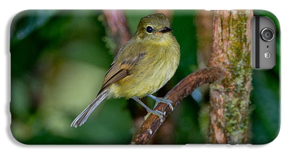 Flavescent Flycatcher IPhone 6s Plus Case by Anthony Mercieca