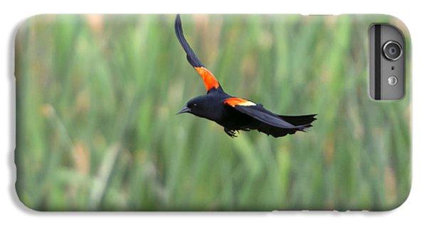 Blackbird iPhone 6s Plus Case - Flight Of The Blackbird by Mike  Dawson