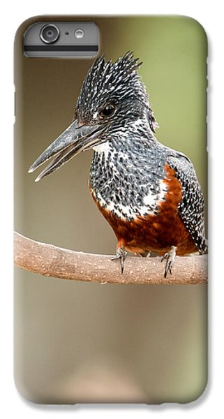 Giant Kingfisher Megaceryle Maxima IPhone 6s Plus Case