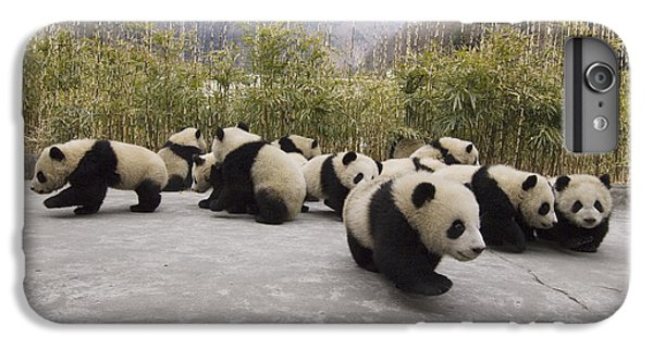 Giant Panda Cubs Wolong China IPhone 6s Plus Case