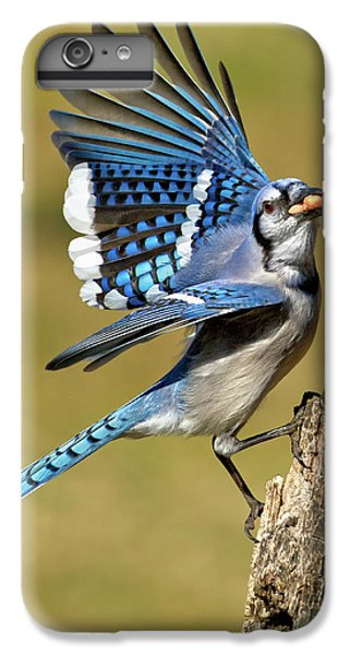 Bluejay iPhone 6s Plus Case - Gotta Go by Bill Wakeley