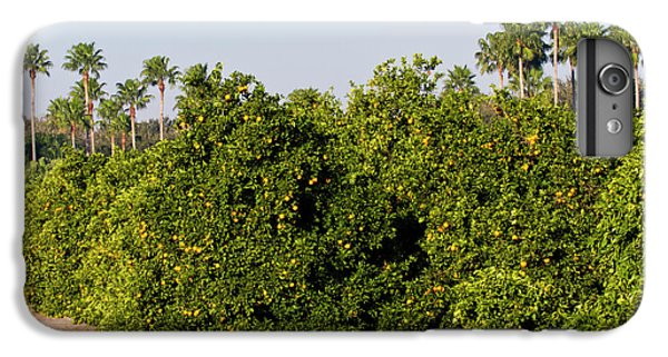 Grapefruit iPhone 6s Plus Case - Grapefruit Grove In Mission, Texas by Larry Ditto