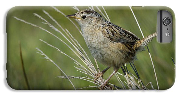 Grass Wren IPhone 6s Plus Case by John Shaw