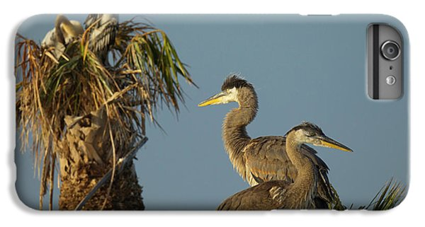 Anhinga iPhone 6s Plus Case - Great Blue Heron Chick In Nest, Ardea by Maresa Pryor