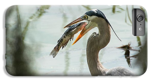 Great Blue Heron With Fish In Mouth IPhone 6s Plus Case by Sheila Haddad